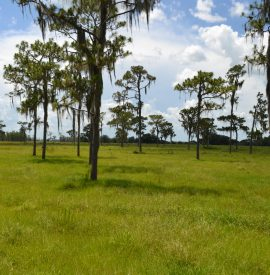 Fish Branch Acres in Hardee, County