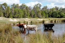 Florida Ranches for Sale - CBC Saunders Real Estate