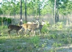 Florida Hunting Leases