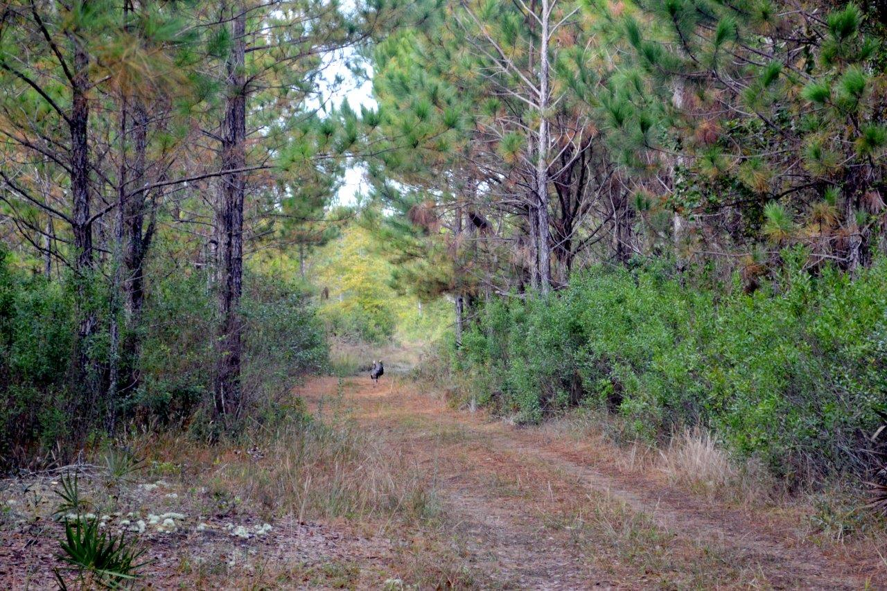 Levy County Florida Property Search