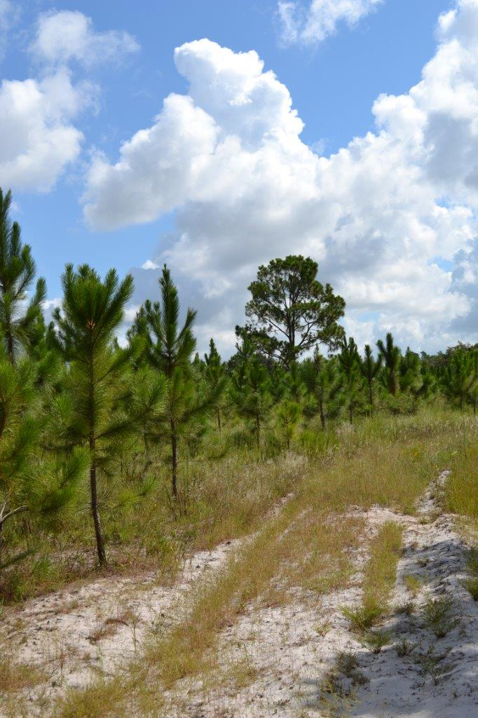 Lake County Residential Acreage On Highway 27 In Clermont Florida