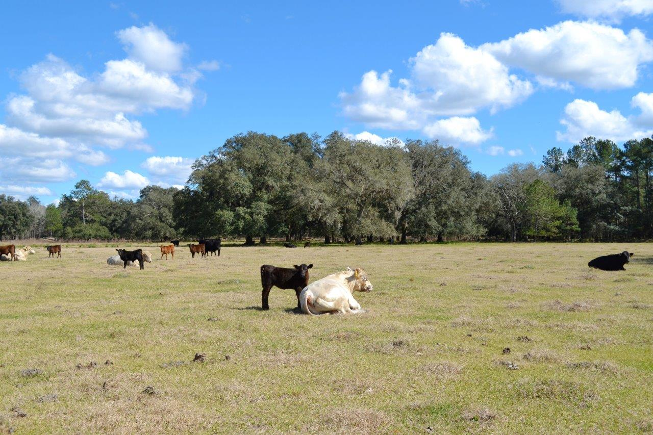 Sold Central Florida Ranch In Brooksville Florida