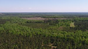 Blackwater Plantation, Parcel B in Quitman, GA sold for $1,200,000 (Bryant Peace & Tony Wallace)