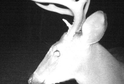 Pontotoc County, Mississippi Hunting Lease