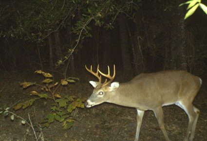 Webster Parish, Louisiana Hunting Lease