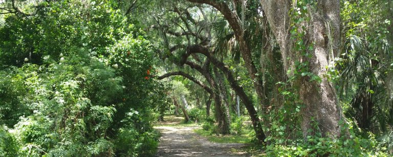 Photo of Florida trail and trees
