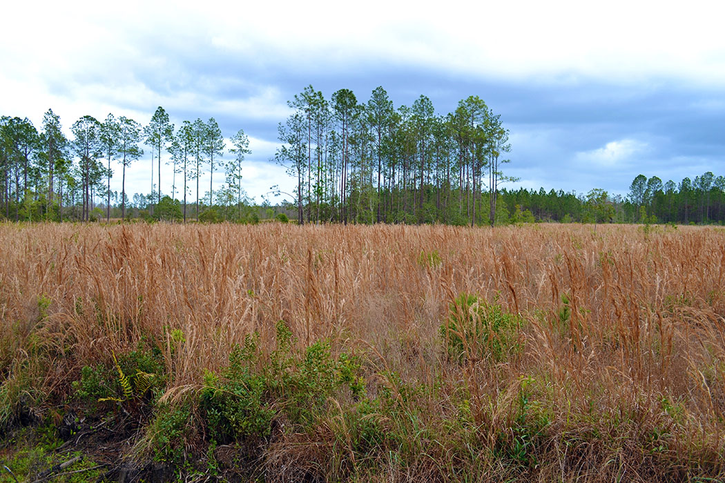 Woods of Ormond Beach in Volusia County, Florida   Saunders Real Estate
