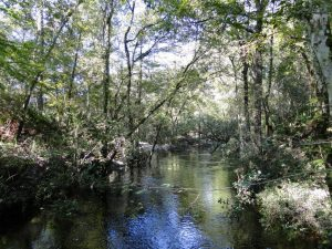 3 Creeks Crossing in Clay County is a 2,608 ± acre recreational and conservation property that sold for $3,390,400. (Dean Saunders and Tony Wallace)
