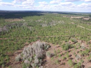 Hiers Timber and Recreation Tract sold for $2,400,000. The 1,381 ± acre property is located in Levy County, Florida. (Debbie Banks and Greg Driskell)