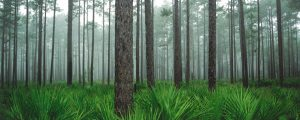 Photo of lovely green Florida forest