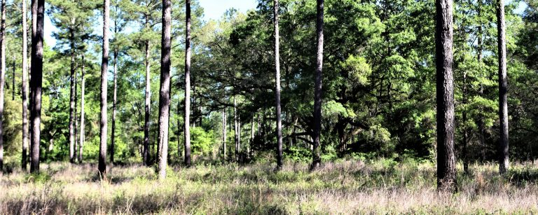 Photo of Jefferson County 1,120 Acres Timberland