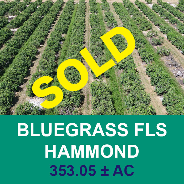 Sold at real estate auction - Bluegrass - Florida Ag